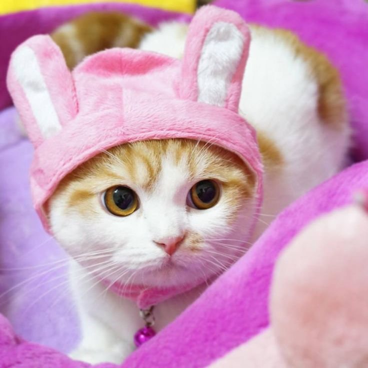 d96514f3952bb90c33c5005b8456ae1a--cats-in-costumes-happy-easter.jpg