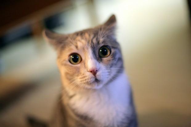 cat-620x413.jpg