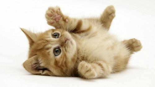 고양이3.jpg