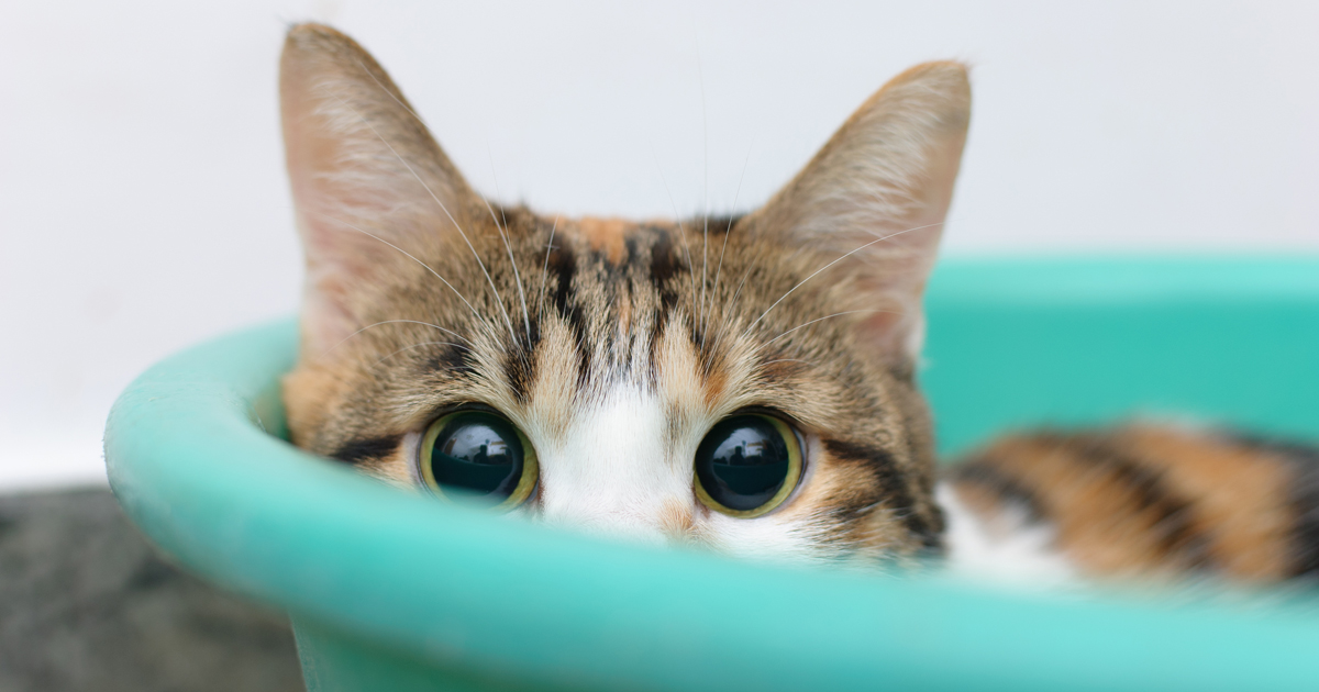 file_431_how-to-make-shy-cat-more-confident.jpg
