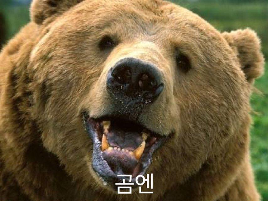곰엔.jpg
